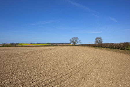 chalky: a newly cultivated field with chalky soil beside a hawthorn hedgerow in amongst rolling hills of canola and wheat in the yorkshire wolds england under a blue sky