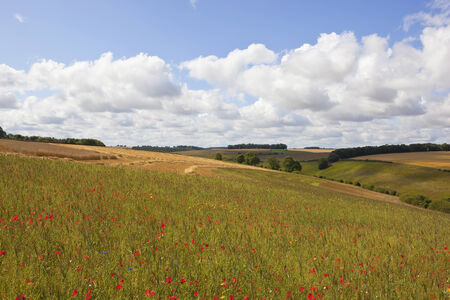 a colorful wildflower meadow with wheat fields trees and hedgerows under a blue cloudy sky in summer on the yorkshire wolds england photo