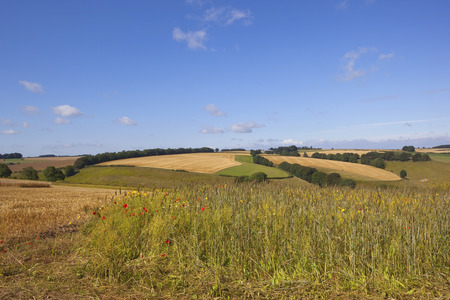 a wildflower meadow in the scenic agricultural landscape of the yorkshire wolds england under a blue sky in summer photo