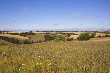 the scenic yorkshire wolds viewed from a colorful wildflower meadow under a blue sky in summer photo