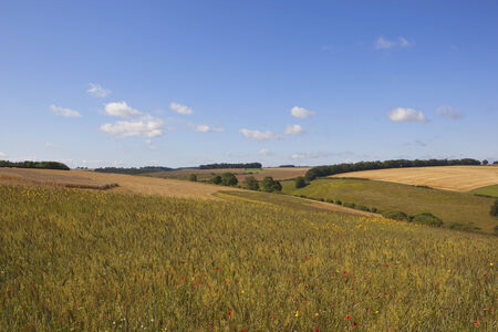 wildflower meadow conservation in the scenic yorkshire wolds england under a blue sky in summer photo