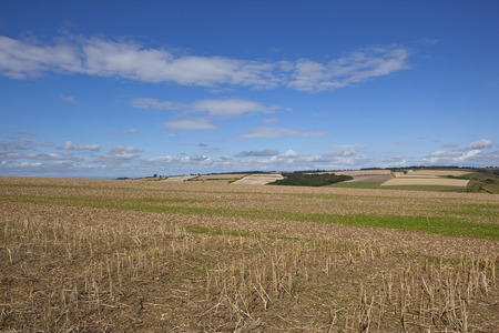late summer: blue sky over patchwork fields in an english landscape in late summer