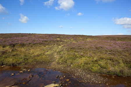 late summer: a rugged moorland stream with grassy heather landscapeunder a blue sky in late summer