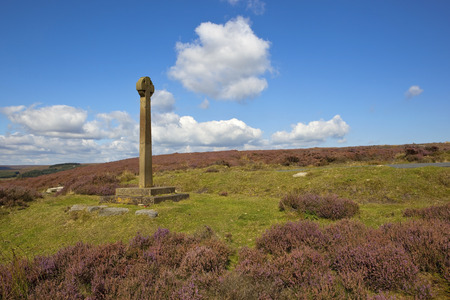 north yorkshire: an old monument on the north york moors amongst flowering purple heather and green grass under a blue sky in late summer