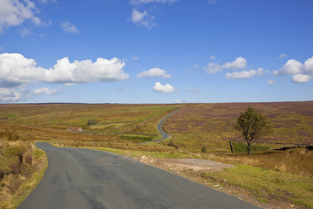 uplands: english upland landscape with a narrow country road winding across the heather moors of the north york moors near rosedale in yorkshire