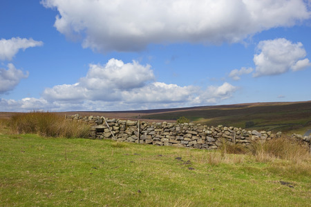 windswept: a country dry stone wall on a windswept moorland under a blue cloudy sky in autumn
