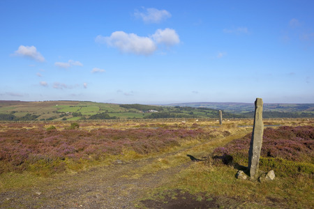 north yorkshire: an ancient moorland monolith amongst flowering purple heather on the scenic north york moor in autumn Stock Photo
