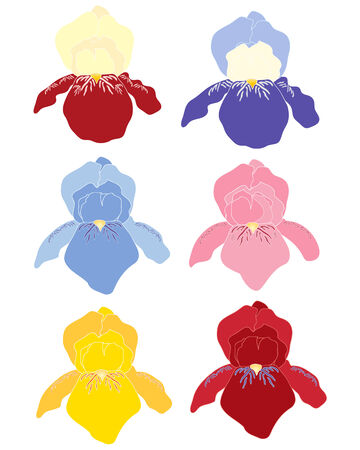 purple iris: an illustration of a variety of colorful iris flower heads in abstract form on a white background Illustration