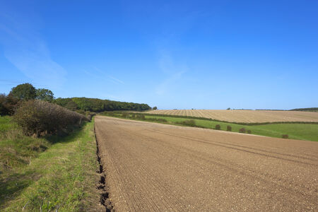 chalky: a hawthorn hedgerow beside newly cultivated chalky farmland in the yorkshire wolds under a blue sky Stock Photo