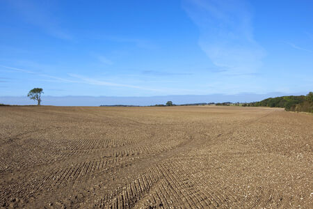 chalky: patterns and texture of newly cultivated chalky soil in the yorkshire wolds under a blue sky