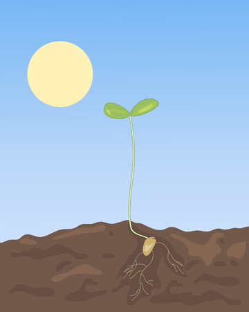 germination: an illustration of a newly germinated spring seedling in rich soil under a blue sky with bright yellow sun Stock Photo