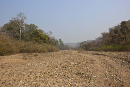 river bed: mixed forest on the banks of a dry river bed in Morni Hills in the Indian state of Punjab