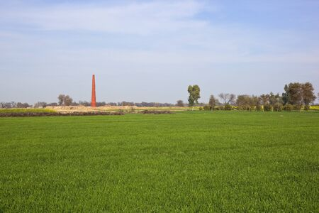 mustard field: punjabi agricultural landscape with green wheat fields and a distant brickyard under a cloudy blue sky