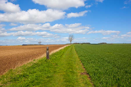 chalky: a scenic country footpath in the yorkshire wolds with a marker post beside a wheat field under a blue cloudy sky