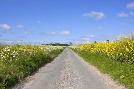 grass verge: una strada rurale attraverso terreni agricoli nel Yorkshire wolds Inghilterra con le colture di senape e un punto di erba con fiori di campo sotto un cielo blu in estate