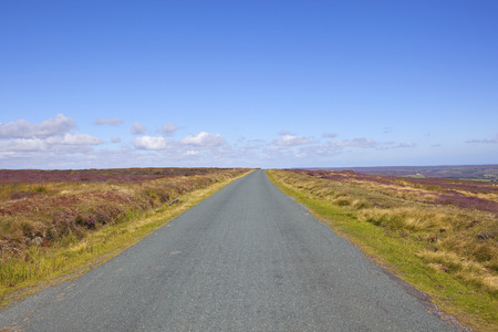 moors: a rural road on the north york moors with acres of flowering purple heather under a blue sky in summer