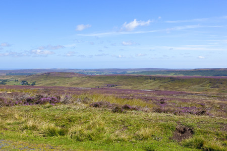 moorland: a wild rugged moorland landscape with purple flowering heather on the north york moors england under a blue sky in summer