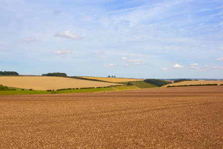 chalky: chalky plowed soil in a field overlooking the scenery of the yorkshire wolds england under a blue sky in late summer