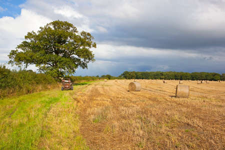 english oak: a golden stubble field with round bales and farm machinery near an oak tree with hawthorn hedgerow under a blue cloudy sky in late summer Stock Photo
