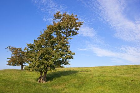 hawthorn trees on a grassy hillside under a blue sky in autumn