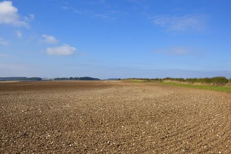 chalky: a vast chalky field newly plowed in scenic agricultural land in the yorkshire wolds england in autumn under a blue sky
