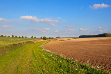 hedgerows: a scenic grassy bridleway in an agricultural landscape with hills and hedgerows under a blue sky in autumn in the yorkshire wolds england