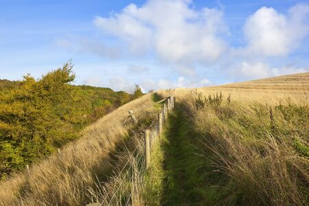 fenced in: a fenced public footpath in the yorkshire wolds england with colorful trees in autumn under a blue sky Stock Photo