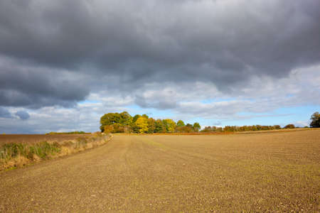 copse: autumnal woodland in the yorkshire wolds england under a blue stormy sky in agricultural landscape