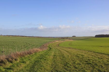 scenic: a grassy country bridleway in the scenic yorkshire wolds on a sunny winter day with a clear blue sky