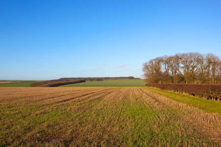 hedgerows: a stubble field in the scenic hills of the yorkshire wolds england with hedgerows and woodland under a clear blue sky in winter Stock Photo