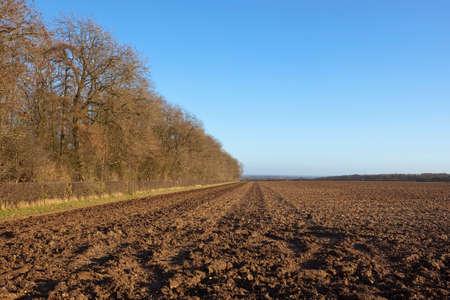 deciduous woodland: winter landscape with deciduous woodland and plow soil under a blue sky