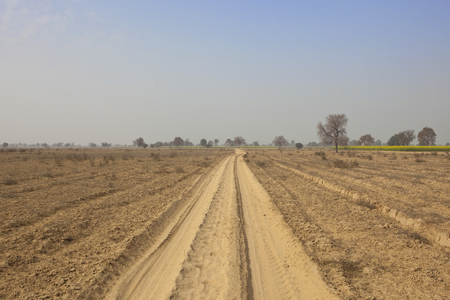 an agricultural district: a dusty track in the agricultural district of abohar in rajahstan with trees and mustard crop under a blue sky in springtime