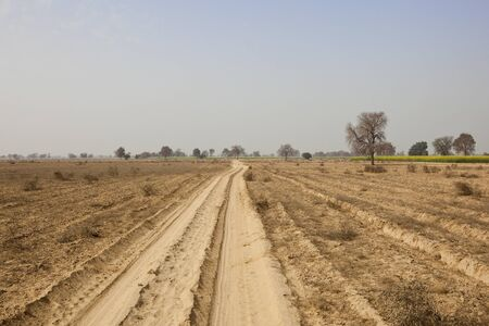 an agricultural district: a dusty track through the arid semi desert agricultural landscape of abohar rural ferozerpur district in rajasthan india