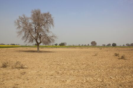 lone  tree: a lone tree in the semi desert landscape of abohar rural in ferozepur district of rajasthan north india Stock Photo