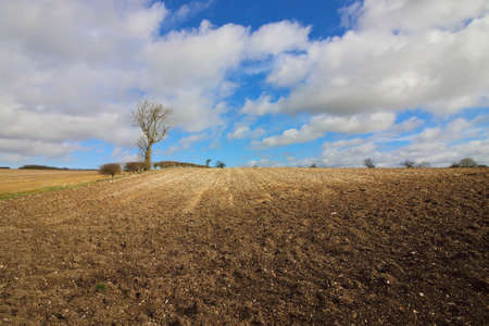 hedgerows: chalky plowed soil in the yorkshire wolds in winter with bare trees and hedgerows under a blue cloudy sky
