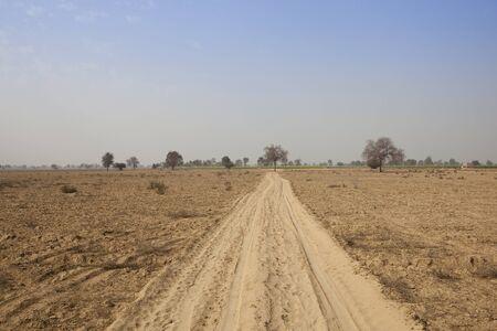 suelo arenoso: pistas en el suelo arenoso de Abohar en Rajasthan con �rboles y campos de mostaza distantes bajo un cielo azul en primavera