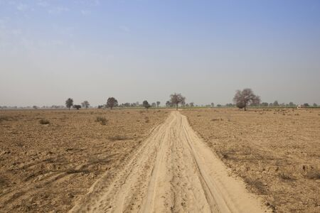 sandy soil: tracks in the sandy soil of abohar in rajasthan with trees and distant mustard fields under a blue sky in springtime Stock Photo