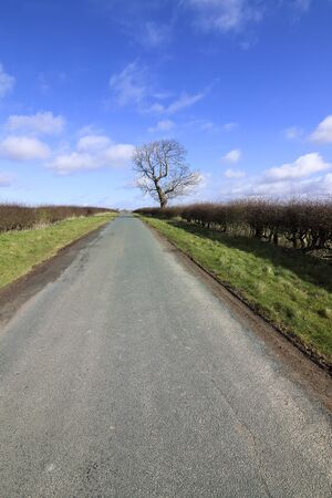 hedgerows: a lone tree in winter with a small country road and hawthorn hedgerows