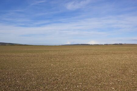 chalky: chalky plowed soil on the yorkshire wolds england in springtime under a blue sky with wispy white clouds Stock Photo
