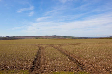 chalky: tyre tracks in chalky soil in a hillside field on the yorkshire wolds england under a blue sky in springtime