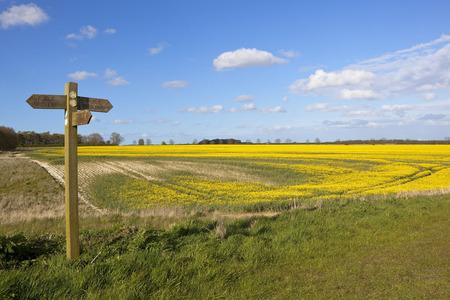 eine hölzerne Wanderweg Schild in der landwirtschaftlichen Landschaft mit Raps und Weizen Kulturen unter einem blauen Himmel im Frühling