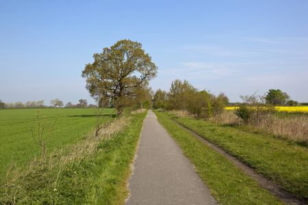 cycleway: a yorkshire tarmac cycleway in springtime with oak trees wheat and oilseed rape crops under a blue sky