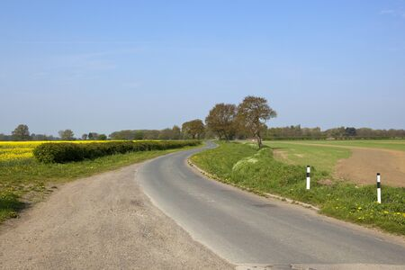 oilseed: a winding country lane in springtime with wheat and oilseed rape crops hawthorn hedgerows and oak trees under a blue sky