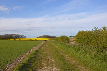 oilseed: a grassy bridleway going through fields of wheat and oilseed rape with hills and woodland in the yorkshire wolds england