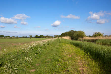 hedgerows: a grassy canal towpath with wildflowers trees and hawthorn hedgerows beside agricultural land under a blue cloudy sky