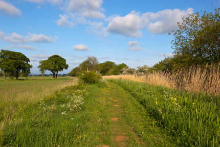 hedgerows: a scenic country canal towpath with wildflowers trees and hedgerows under a blue cloudy sky in may