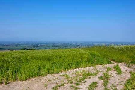 vale: a summer hillside barley field with a view of the vale of york under a clear blue sky in summer