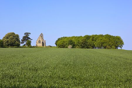 hedgerows: a small english historical church beside trees and hedgerows with a wheat field under a blue sky in summer