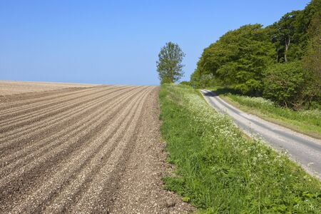 chalky: a furrowed potato field and a small country road in the yorkshire wolds under a blue sky Stock Photo