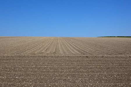 chalky: lines and patterns of a chalky yorkshire wolds field with furrows for a potato crop under a blue sky